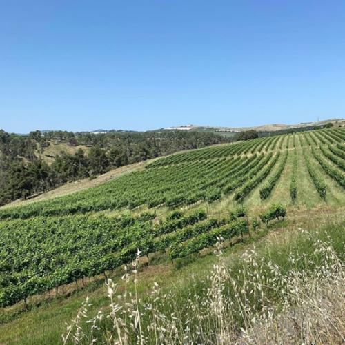Galil Mountain Syrah 2019