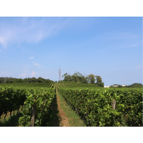Pratello Pinot Grigio 2019