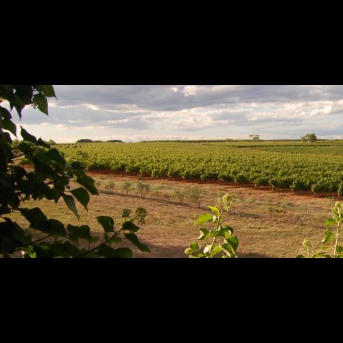 Château Vessière Mas de Vessiere Blanc 2020