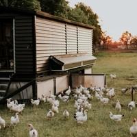 Help de Noorderhoeve aan een 2e kippenkar!