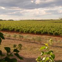 Sappige biodynamische rose uit de Franse Languedoc