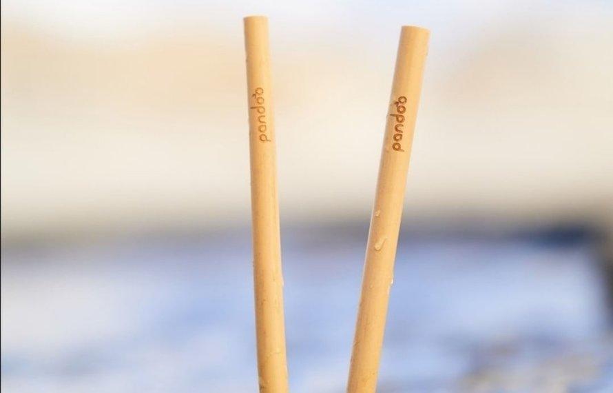 Bambus zur Reduzierung von Umweltverschmutzung und Abholzung!