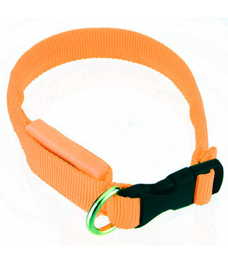 LED Hondenhalsband - Mini - Oranje