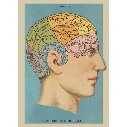Poster «Phrenology»