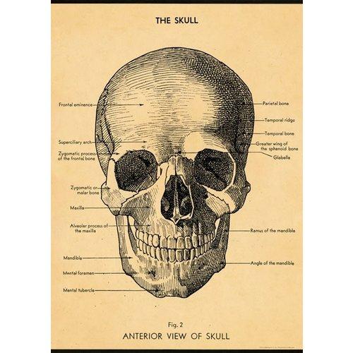 Poster «The Skull»