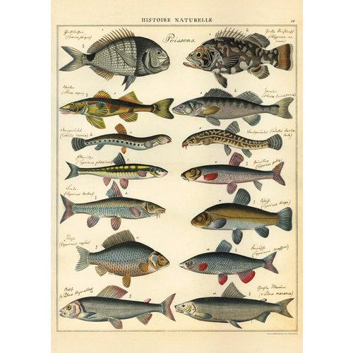 Poster «Natural History Fish»