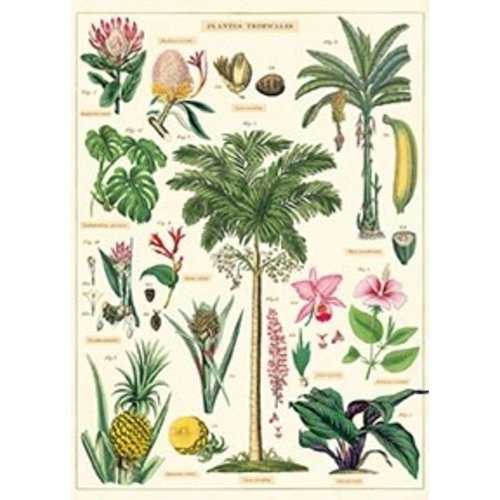 Poster «Tropical Plants»