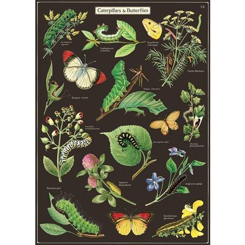 Poster «Caterpillars & Butterflies»