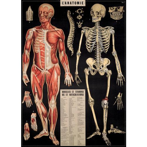 Poster «L'anatomie»