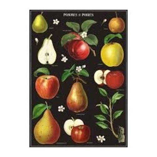 Poster «Apples & Pears»