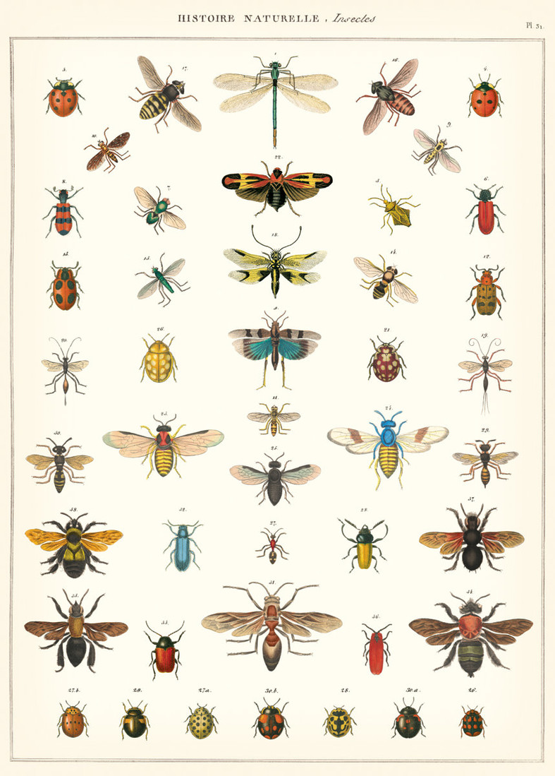 Poster «Natural History Insects»