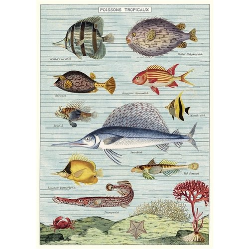 Poster «Tropical Fish»