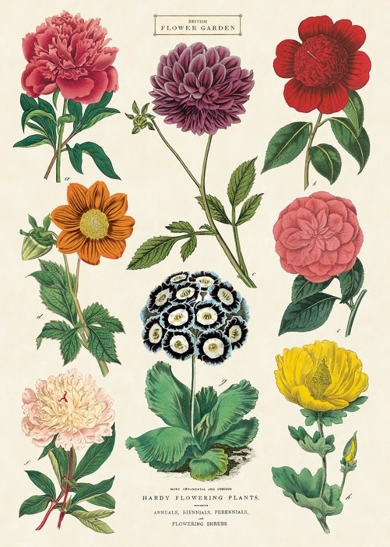 Poster« Botanica 2»