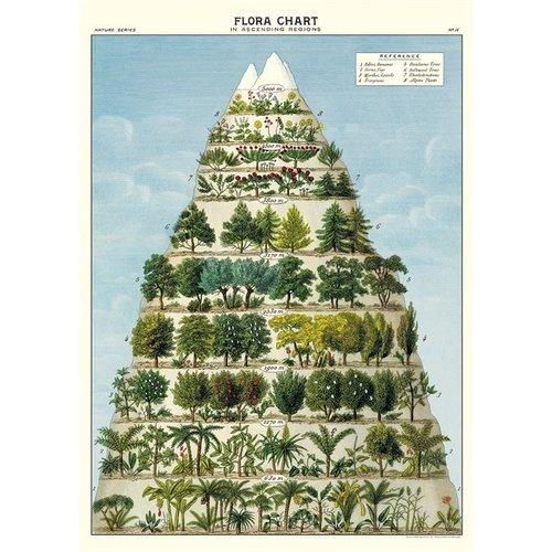 Poster «Flora Chart»