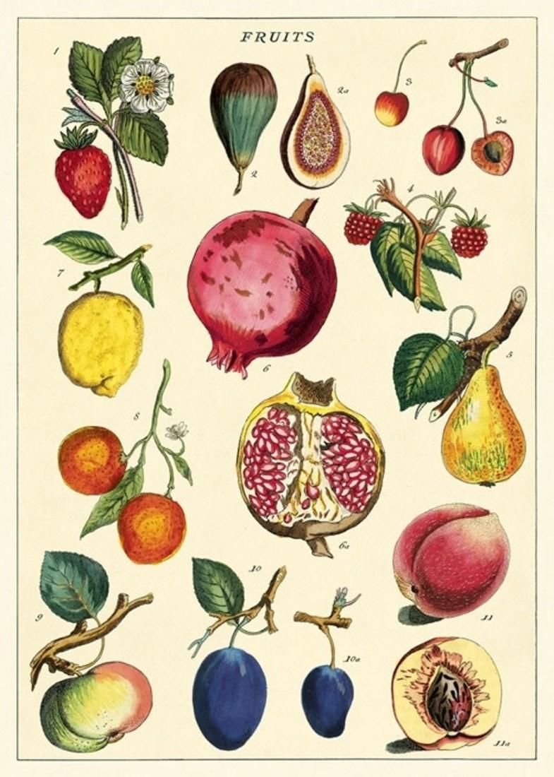 Poster «Fruit 2»
