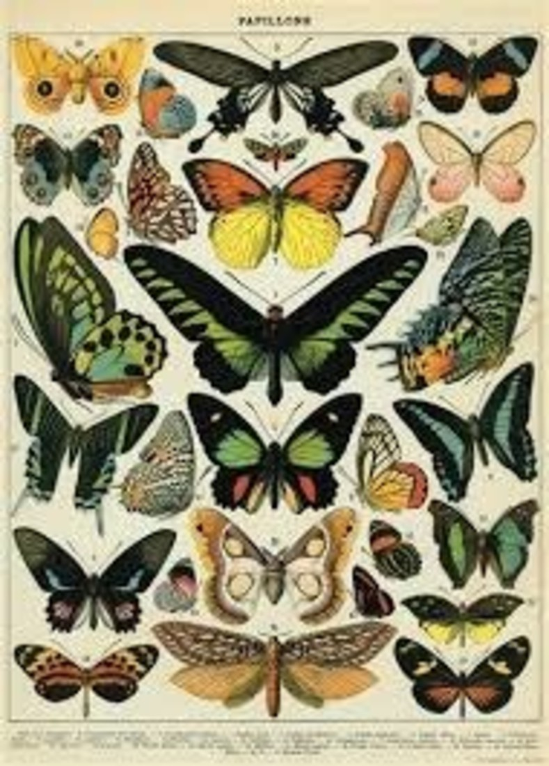 Poster «Butterfly»