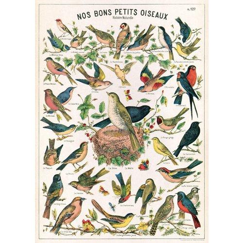 Poster «Bird Chart»