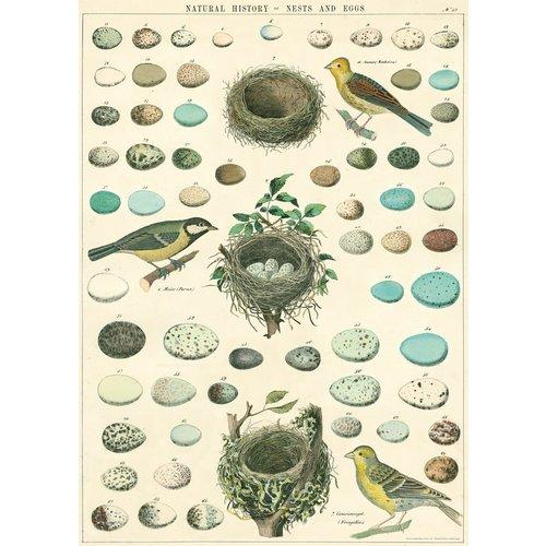 Poster «Nest, Eggs & Bird»