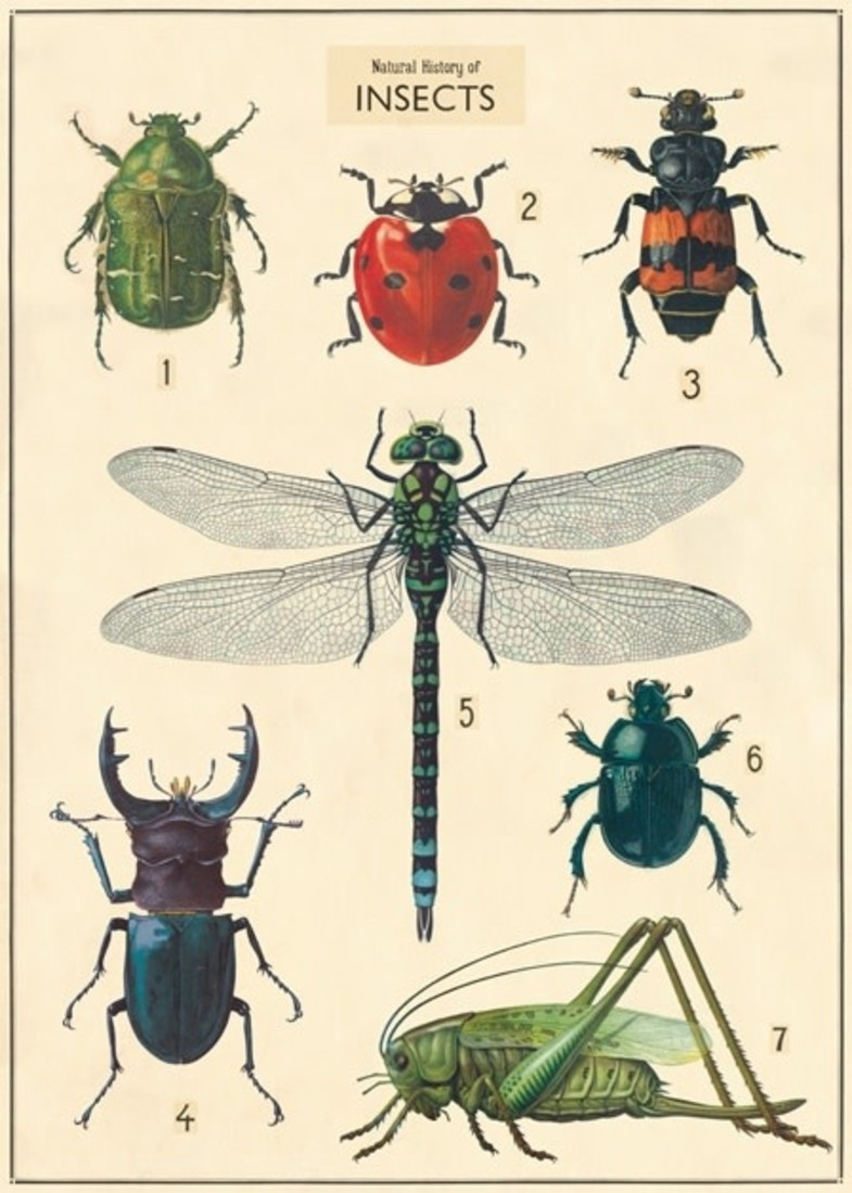 Poster «Insect Chart»