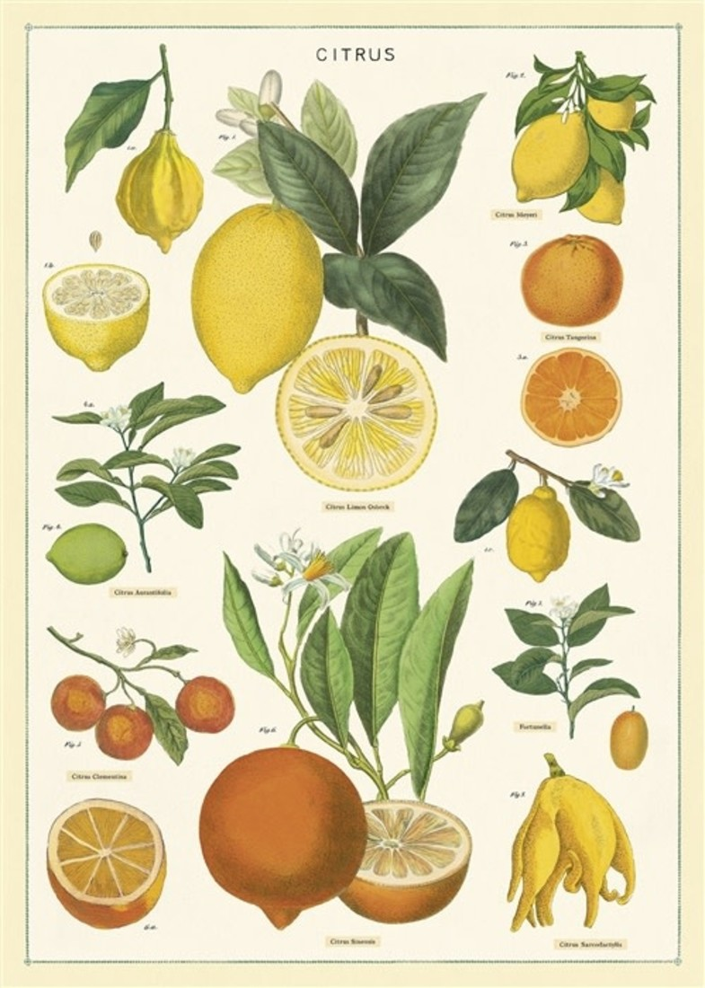 Poster «Citrus»
