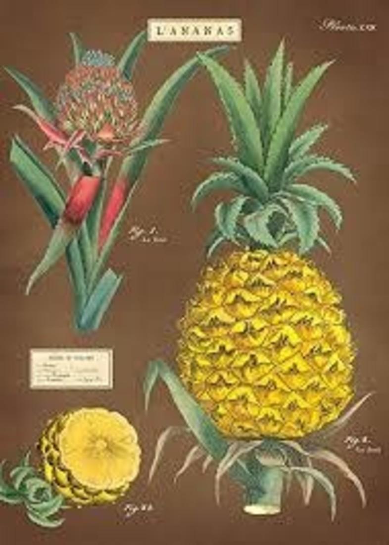 Poster «Pineapple»