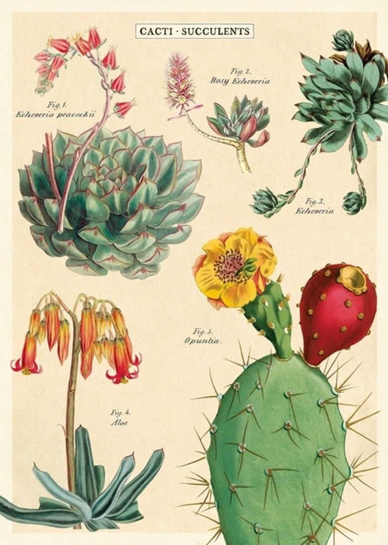 Poster «Cacti & Succulents 2»