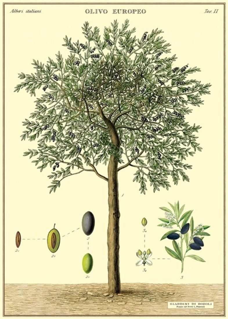 Poster «Olive Tree»
