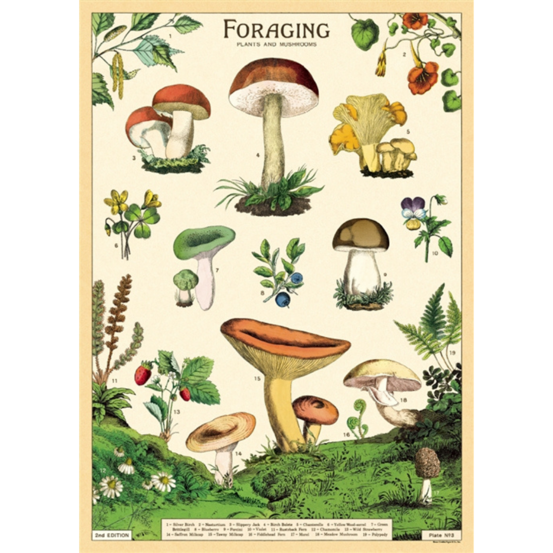 Poster Pilze