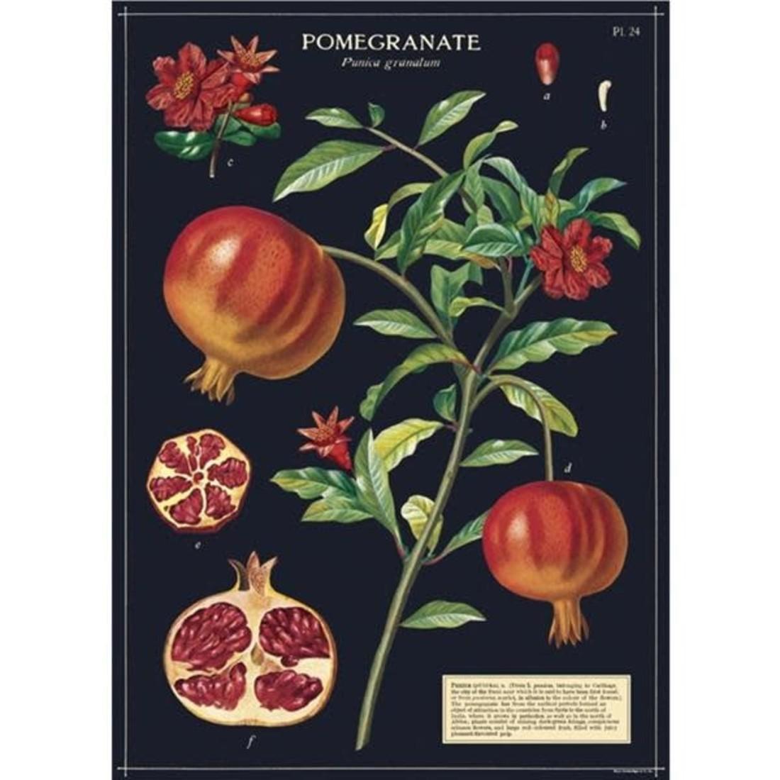 Poster Granatapfel