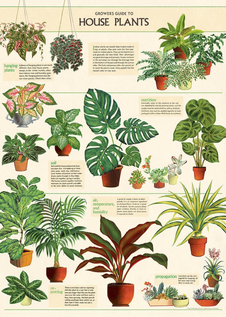Poster Zimmerpflanzen