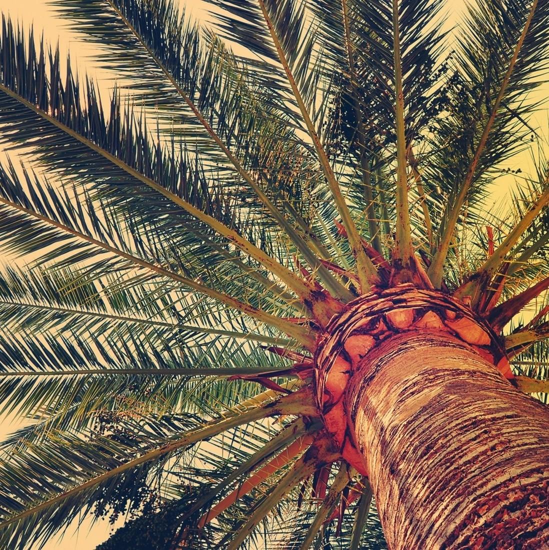 Duftsachet - Palme Kokos