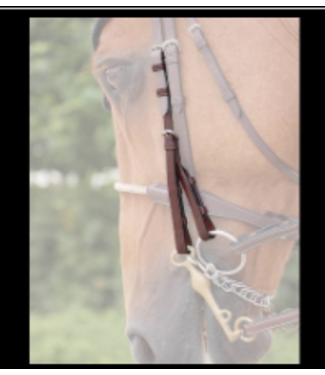 Dy on Double Bridle Backenstücke