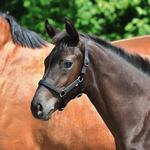 Busse Headcollar YOUNG black Foal