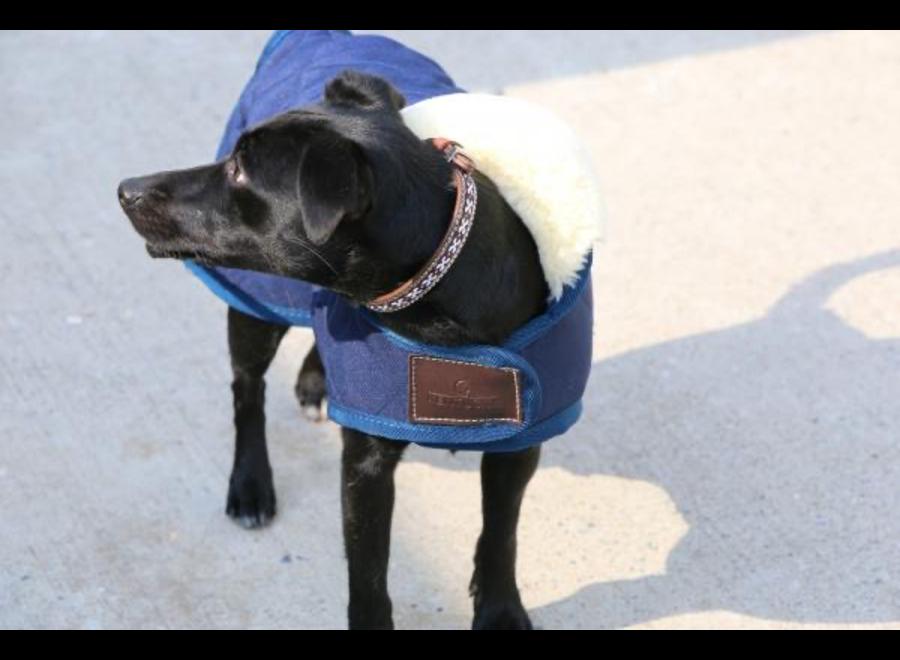 Dog coat Kentucky
