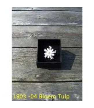 HB HB Plastronspeld Bloem Tulp
