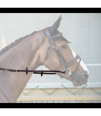 Dy on Adjustable Reins
