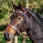 Dy on Bitless Bridle La Cense Collection