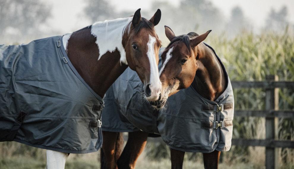 Kies uw paardendeken