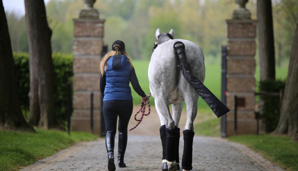Inpaklijst voor als je met je paard op reis gaat