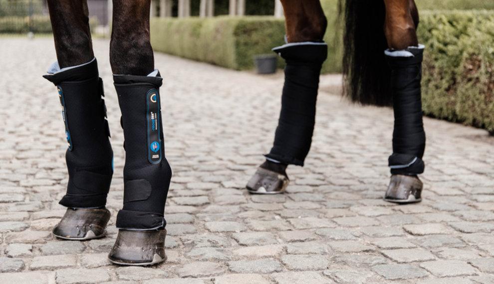 Help, mijn paard heeft dikke benen!