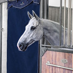 Equiline Longwave - Long Stable Curtain
