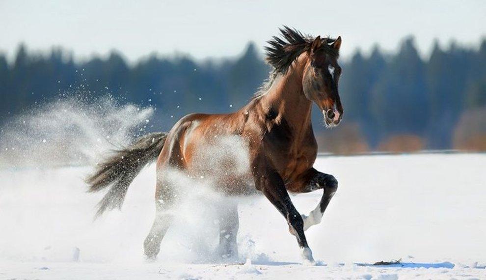 Paarden en kou: 6 tips bij koud weer