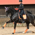 Equito Saddle Pad Sweet Clementine