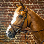 Dy on X-Fit Bridle D-Collection