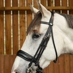 Dy on Matte Large Crank Noseband Double Bridle Working
