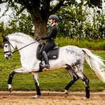 Equito Saddle Pad - Black Bronze 2.0