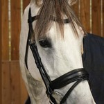 Dy on Matte Large Crank Noseband Bridle With Flash - Working