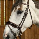 Dy on Patent Large Crank Noseband Bridle With Flash - Working
