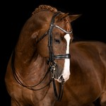 Mrs. Ros Galaxy Silver Double Bridle