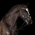 Mrs. Ros Imperial Gold Double Bridle